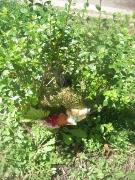 Kranz auf dem abgebrochenen Baumstamm