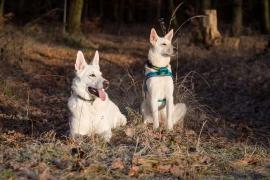 Hunde Zuhause 2016