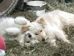 Inka (nun Jule) und Nika (nun Amy) im Januar 2018_2