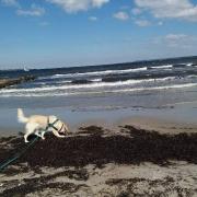 Nira beim Kurztripp ans Meer_2