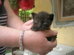 Katzenhilfe im August 2019 bei Erzsike_1