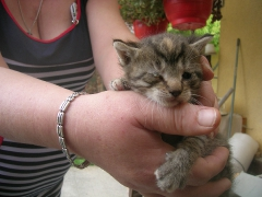 Katzenhilfe im August 2019 bei Erzsike_3