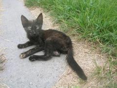 Katzenhilfe im August 2019 bei Erzsike_9