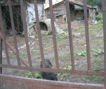 Masols Hundehütte: ein Betonring
