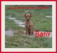 Meldung Chihuahuahündin Samanta und ihre 4 Welpen Bany, Beppo, Jula und Maya suchen ein Zuhause
