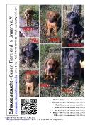 Gegen Tierelend in Ungarn eV - Flyer - Dudus, Kormos, Mazi, Mori, Nero, Picur, Pila
