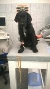 in der Tierklinik