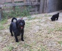 Kozy, Bärly und Mogli haben ein Zuhause