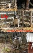 Meldung Lily
