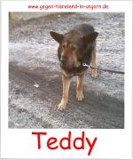 Teddy sucht Patenschaft und Zuhause