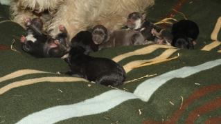 1. Fall: Die Mutter und ihre 6 Welpen