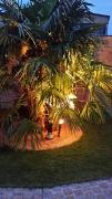 Cabbys neuer Garten 3