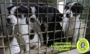 Spendenchance für Bandis Tierheim