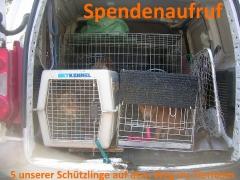 Spendenaufruf: 5 unserer Hunde auf dem Weg ins Tierheim