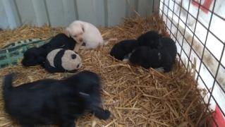 Die Welpen im Tierheim Lajosmizse_3