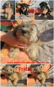 Kiky, Mitzy und Fritzy