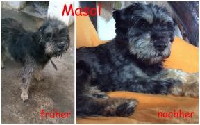 Masol vorher und nachher