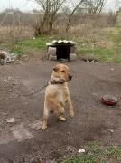 2 Hunde brauchen unsere Hilfe_2
