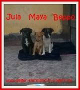 Jula, Maya und Beppo