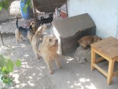 Szilvias Hunde