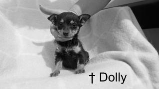 Dolly †
