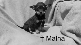 Malna †